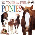 Ponies (Board book)