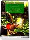 Secret Garden - Paperback