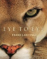 Eye to Eye (Hardcover)