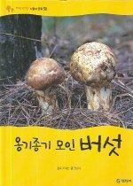 옹기종기 모인 버섯 (식물과균류)