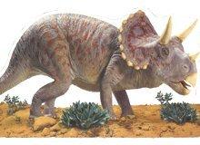 Triceratops Board Book (Board Book)