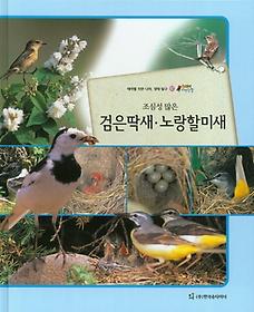 조심성 많은 검은딱새, 노랑할미새 (조류)