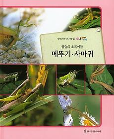 풀숲의 초록이들 메뚜기,사마귀 (곤충류)