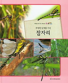 투명한 날개를 가진 잠자리 (곤충류)