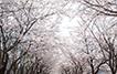 벚꽃엔딩처럼 믿고 읽는 작가들의 봄맞이 신작 10선!