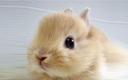 '피터 래빗'은 잘 그린 토끼 아닌 과학적 관찰의 산~