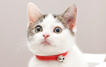 [카드뉴스] 고양이는 왜 구멍에 집착할까요?