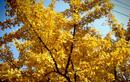 당신이 가을을 타는 이유